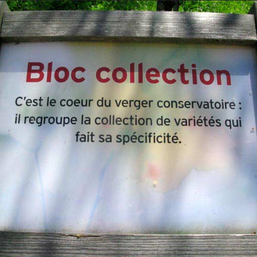 <h3>Bloc Collection</h3>